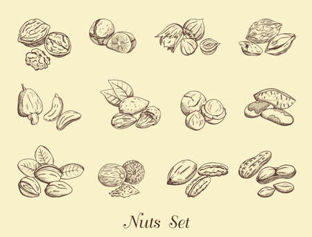 nutty: Set of nuts on a neutral background, vector illustration Illustration