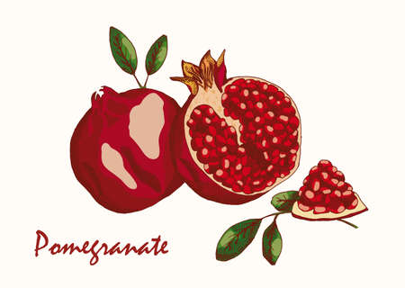 Painted pomegranate on a neutral background Vectores