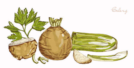 Fresh greens and celery root on a neutral background