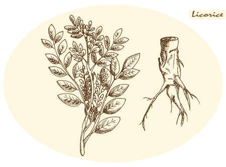raices de plantas: raíz de regaliz y regaliz sobre un fondo neutro