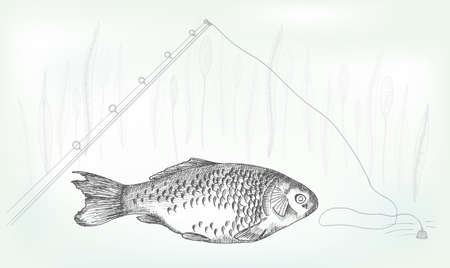 crucian: Hand drawing crucian on a neutral background, vector illustration