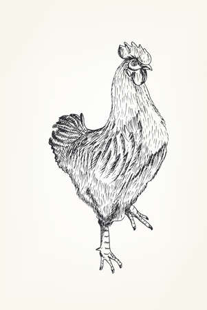 Hand drawing of a rooster on a neutral background