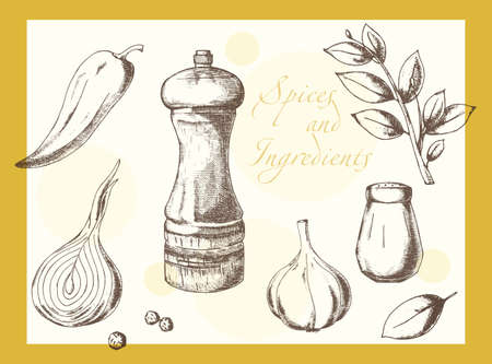 pepper mill: Set of natural spices drawing made by hand Illustration