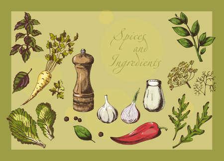 Bunte Reihe von Gewürzen, Kräutern und Zutaten