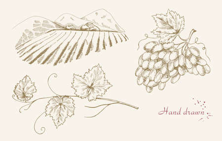 harvesting: Hand drawn vine set. Vector illustration Illustration
