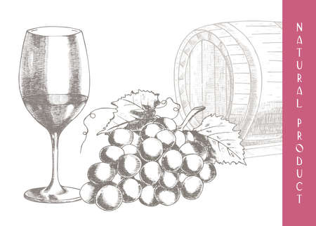 winemaking: Hand drawn illustrations of grapes and  wine-making Illustration