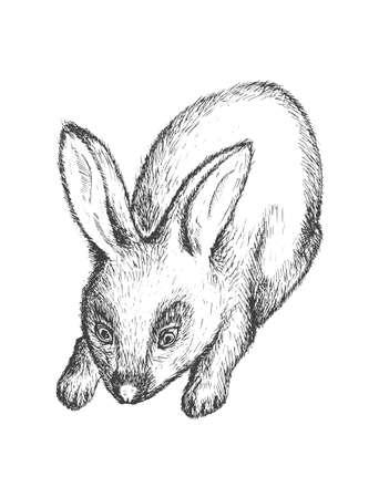 Black and white rabbit illustration
