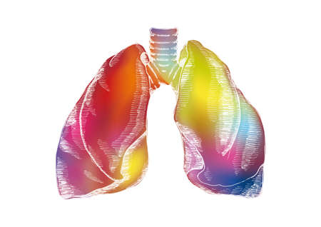 computer art: Engraving colorful human lungs illustration