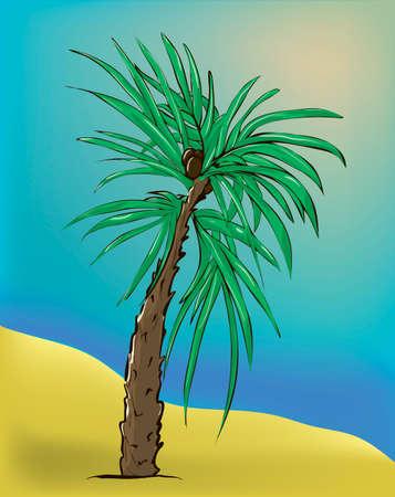 Palms tree. Vector illustration.