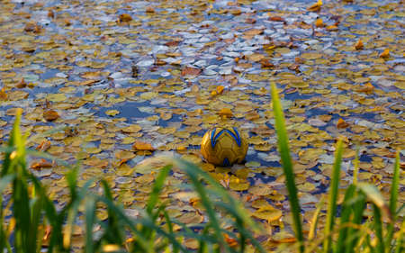 yellow ball in the lake with autumn foliage Stock Photo
