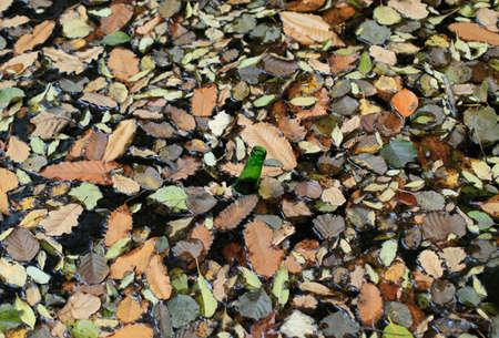excremental: An empty green bottle inside a lake covered with autumn leaves