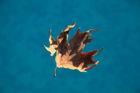 dried leaf: Dried leaf on the water