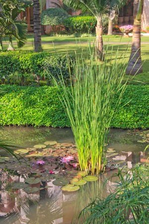 Lush tropical garden in Bangalore photo