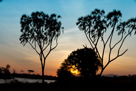 silhoutted: Palms trees silhoutted on banks of Uaso Nyiro River