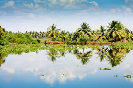 backwaters: Palm trees reflection in Kerala backwaters, Cochin, India