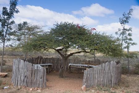tabel: Shaded seating and tabel under acacia tree in masai mara kenya Stock Photo