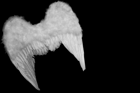 Angel's wings Stock Photo - 6037635