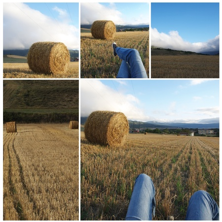 Collage agriculture conceptual: still life, relax, rural, agriculture photo