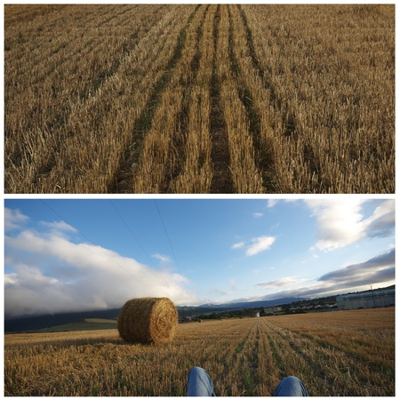 Colllage agriculture conceptual: still life,relax,rural,agriculture photo