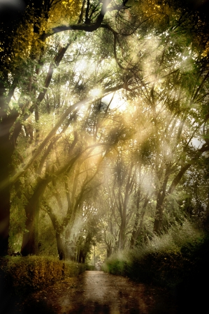 background forest with light and shadows