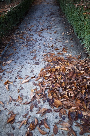 Autumn Pathway background Stock Photo - 11569436