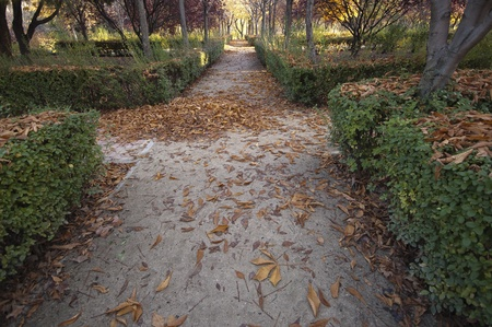 Autumn Pathway background   photo