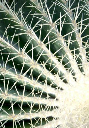 cactus green Stock Photo - 13673414