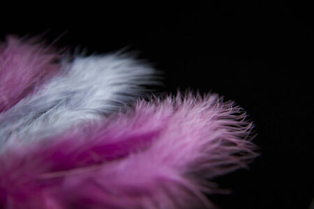 fragile peace: feathers isolated in black background