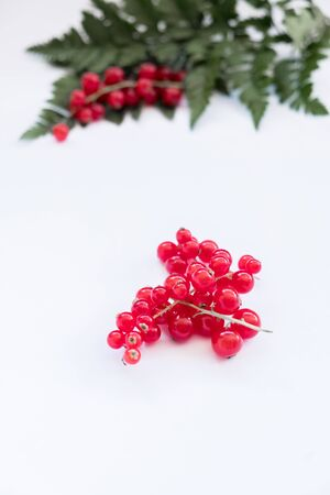 Red berries and ferns on white