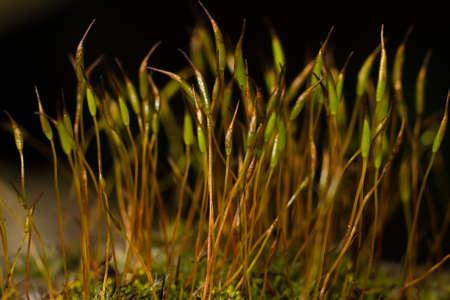 macroshot: forest moss on a dark background