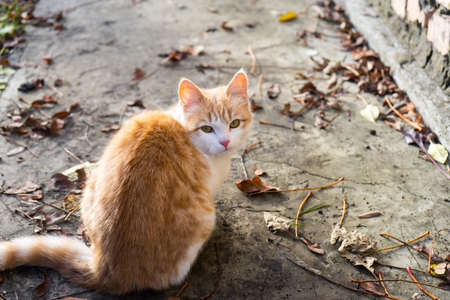 Homeless white-red kitten sitting on the ground