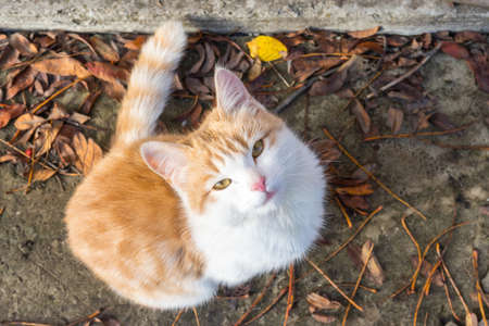 Homeless white-red kitten sitting on the ground and begging to the house