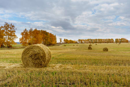 Picturesque autumn landscape with beveled field and straw bales. Beautiful agriculture background Foto de archivo