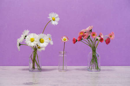 Summer creative still life in minimal style. White and pink Marguerite daisy flowers bouquets in small glass bottle on light lilac background