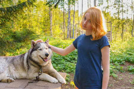 Beautiful young lady with her adorable cute dog of siberian hasky breed in summer forest at sunset.  Happy teenage girl and pet. Authentic lifestyle moments Фото со стока