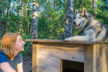 Beautiful young lady with her adorable cute dog of siberian hasky breed in summer forest at sunset.  Happy teenage girl and pet. Authentic lifestyle moments Stok Fotoğraf