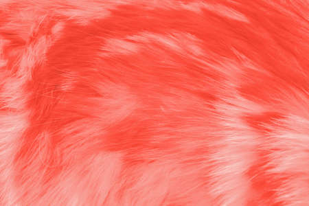 Modern wooly background or mock up with space for text. Texture of animals fur in color of the year 2019 Living Coral