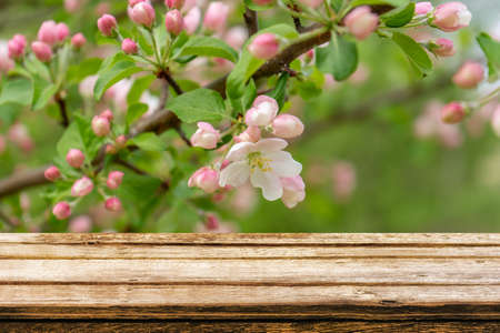 Empty wooden table with spring background of blossoming wild apple tree. Mock up for display or montage products