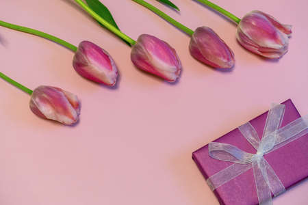 Pink fresh tulips and gift box on pastel paper background. Beautiful spring floral mock up. Greeting card for valentines, womens or mothers day. Flat lay, top view, copy space