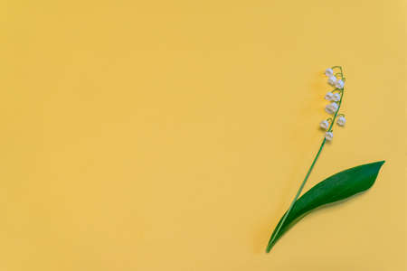Lily of the valley flower on bright yellow paper background. Beautiful spring composition in minimal style. Top view, flat lay, copy space Stock Photo