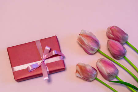 Pink fresh tulips and gift boxes on pastel paper background. Beautiful spring floral mock up. Greeting card for valentines, womens or mothers day. Flat lay, top view, copy space