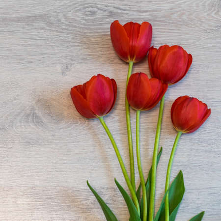 Bright red tulips on light wooden background. Beautiful spring floral mock up. Greeting card for womens or mothers day. Flat lay, top view, copy space