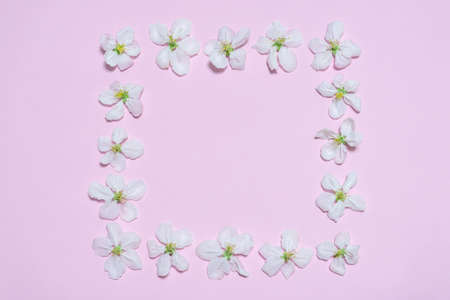 Square frame made of blooming apple flowers on light pink pastel background. Beautiful spring composition, womens or mothers day concept. Mock up, flat lay, top view, copy space for text. Banco de Imagens