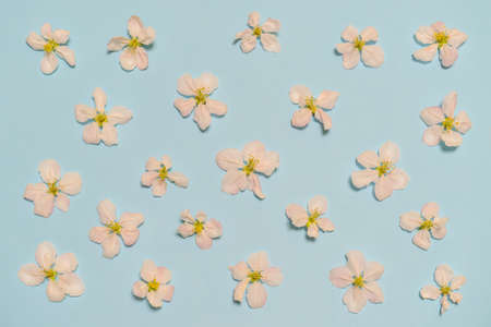 Blossoming apple flowers on light blue pastel background. Beautiful spring layout, womens or mothers day concept. Flat lay, top view, copy space for text.