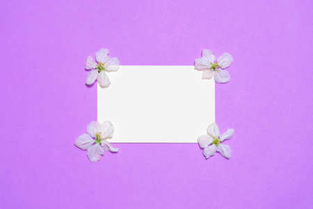 Empty white paper card with blooming apple flowers on bright lilac background. Beautiful spring composition, womens or mothers day concept. Mock up, flat lay, top view, copy space for text. Banco de Imagens