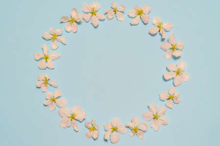 Round frame made of blooming apple flowers on light blue background. Beautiful spring composition, womens or mothers day concept. Mock up, flat lay, top view, copy space for text.