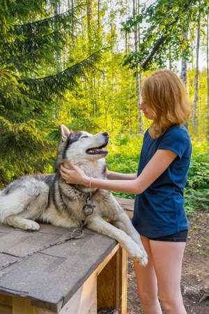 Beautiful young lady with her adorable cute dog of siberian hasky breed in summer forest at sunset. Happy teenage girl and pet. Authentic lifestyle moments. Zdjęcie Seryjne