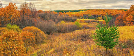Picturesque autumn landscape in green and yellow colors. Panoramic view from hill to lowland with grove and field in cloudy day. Colorful autumnal nature, beautiful natural background