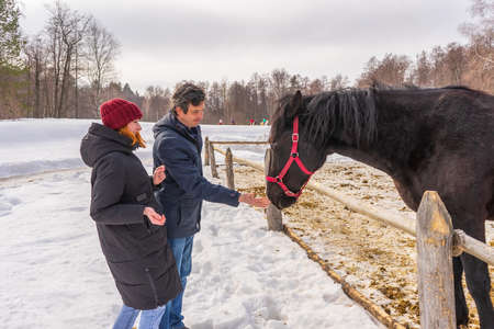 Teen girl and middle aged man feeding horse at ranch in snowy day. Father and daughter at countryside against rural landscape. Winter weekend at farm, healthy lifestyle, authentic moments.