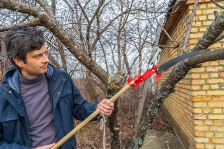 Farmer man with garden saw for cutting branches of cherry bush overgrown with lichen. Pruning of fruit trees with lopper. Spring or autumn work in garden. Gardening concept.